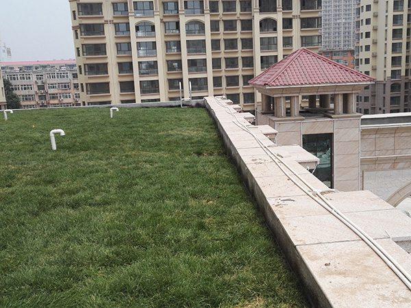 屋顶草坪 (1)